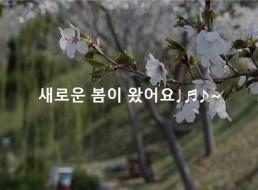 그대들의 봄날이 꽃피는 순간 : 봄빛제