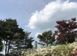 5월의 아름다움 뒤에는 사람들의 손길이 있다 : 부처님 오신날 풍경 스케치